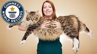 Longest cat - Meet the Record Breakers