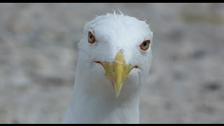 Чайка. Вид снизу. Sea-gull. Bottom view