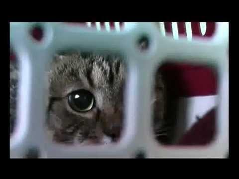 sperma u maca hd