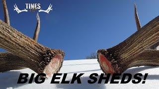 BIG ELK SHEDS - SURRENDER - TU Tuesday Episode 58 MUST WATCH