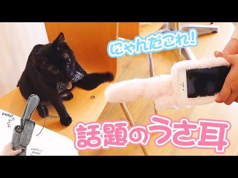 【Tik Tokで大流行】今話題の動くうさ耳のスマホケースに反応する子猫が超かわいい。。