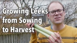 Growing Leeks from Sowing to Harvest