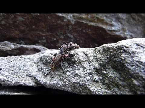 Das Bild des Nagels mit gribkom