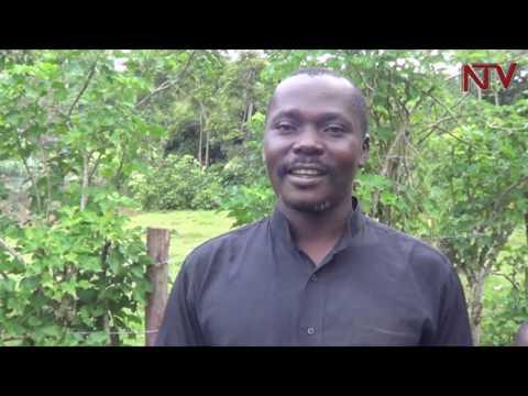 KAZAMBI MU NNIMIRO: Ab'e Jinja beemulugunyizza eri UPDF