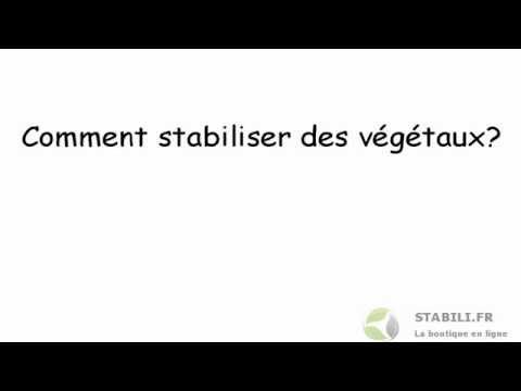 Comme traiter le microorganisme végétal du pied lamizil