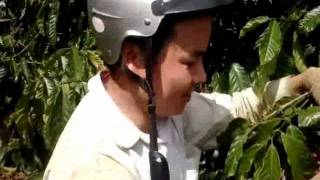 Vườn cà phê tiền tỉ của đại gia Nguyễn Đăng Khoa - Đăk Nông