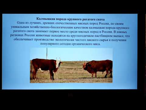 , title : 'Comparative analysis of economic and biological features of Kalmyk and Mongolian cattle breeds