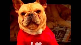 Милые и смешные собаки | Подборка видео приколов про собак и щенков