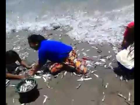 La pesca da reti su video di Kama