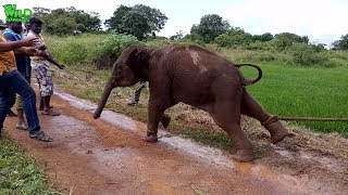 An angry baby elephant fights back when officers try to take it to a safe area