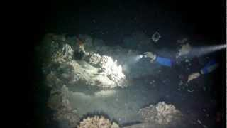 preview picture of video 'Mala Pier Night Dive, Maui'
