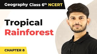 Tropical Rainforest - India: Climate, Vegetation, And Wildlife | Class 6 Geography