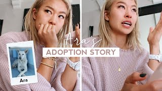 Abused And Neglected Rescue Dog Adoption Story | ARA VLOG | RRAYYME