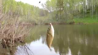 Ловля мелкого карася в пруду на