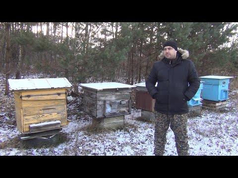 Зимовка пчел под пленкой на сетчатом и глухом дне  Продажа пчелопакетов  Продажа пчел