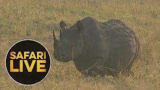 safariLIVE: The Gauntlet - Episode 2 - August 04, 2018