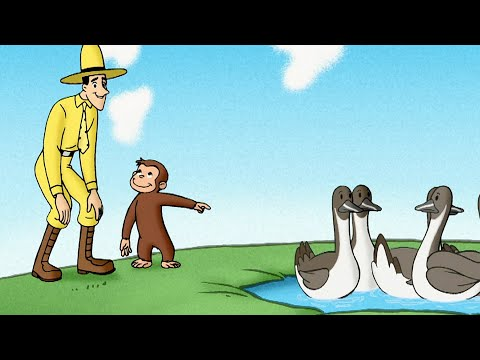 , title : 'George and the Ducks | Curious George | Animated Cartoons For Children