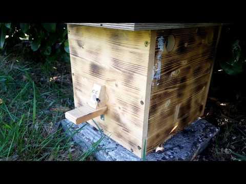 Шмели на домашнем участке. Альтернатива пчёлам - как приютить шмелей у себя дома. Содержание шмелей.