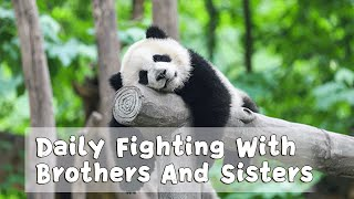 Daily Fighting With Brothers And Sisters | iPanda