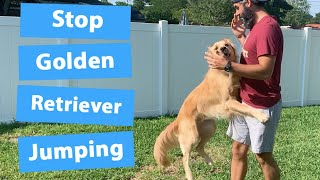 Train Your Golden Retriever To Stop Jumping (3 Easy Steps)