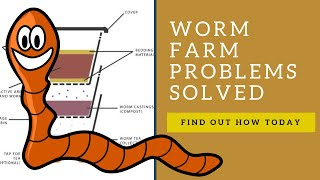 7 Common Worm Farm Problems Solved