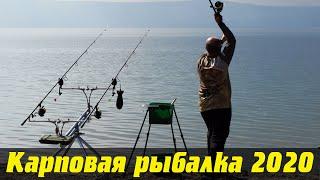 Карповая ловля 2020 с владимиром николаевым