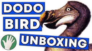 Dodo Bird Unboxing - Objectivity #130