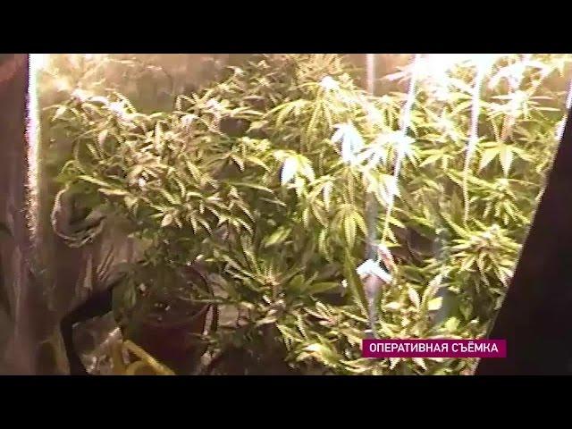 В Ангарске задержали наркодельца