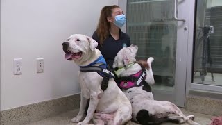 Miami-Dade animal services needs home for 2 dogs with strong bond