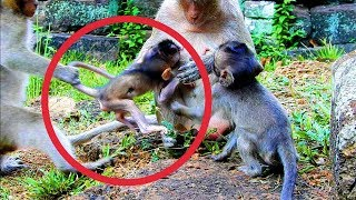OhGod!!! Why Is Dee Dee Doing So Naughty  Like This On Brutus JR? | Pity Baby Monkey.