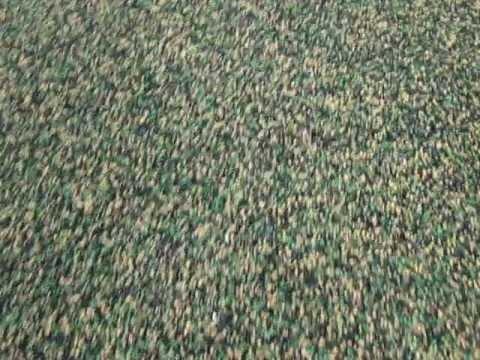 Jak usunąć nasiona na dużych palcach