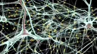О чем расскажет модель головного мозга человека