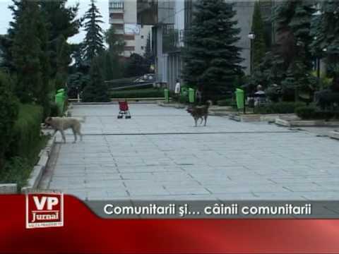 Comunitarii şi… câinii comunitari