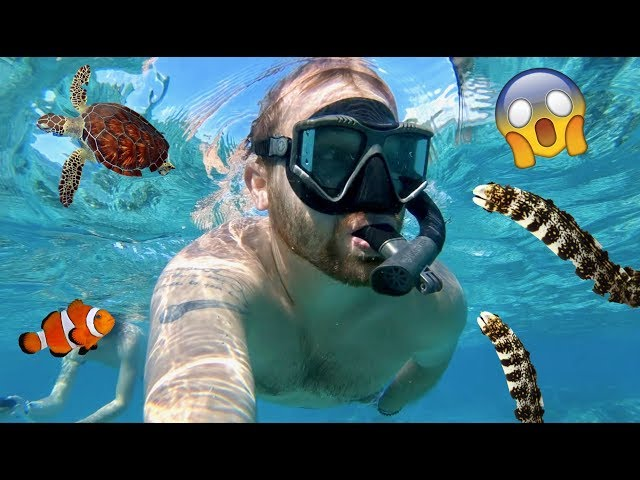 Living on Tropical Island! Swimming In Ocean! Sea Turtles & Baby Fish   Family Vacation Vlog