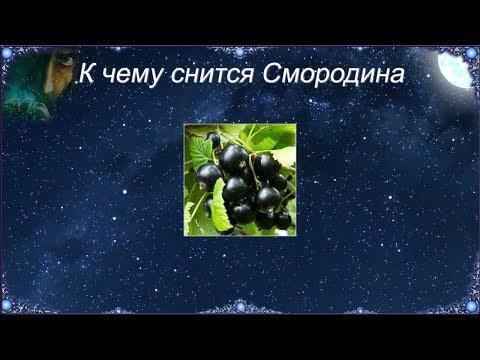 К чему снится Смородина (Сонник)