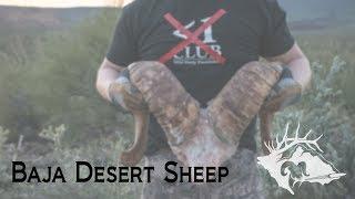S10 E14 - Less Than 1 Club Baja Desert Sheep
