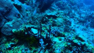 St Lucia - Diving