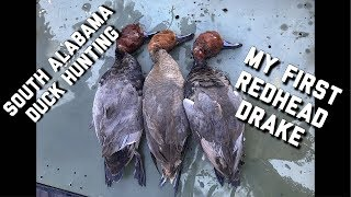 Public Land Diver Duck Hunt   Shooting Redheads On Open Water