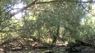 preview picture of video 'Kisvárosi természetbúvár - Trip On Mosoni-Duna near Mosonmagyaróvár 1.'