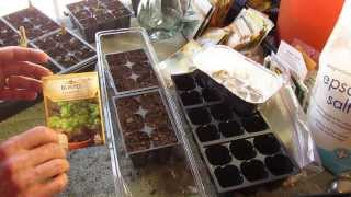 Great Herbs! How to Start Cilantro Indoors: Keep It Sowing! - MFG 2014
