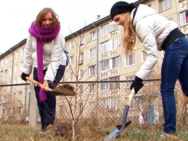 Аллея старшеклассников выросла в Ангарске