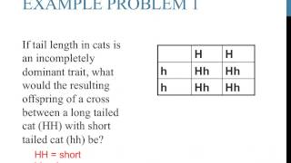 Punnett Square Practice Problems (incomplete Dominance)