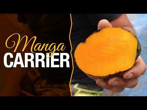 Manga Carrier de polpa laranja