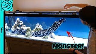 Terrifying SEA MONSTER INVADES My Aquarium