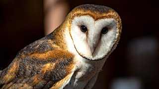What Makes Them So Quiet and So Deadly? | Spiders, Owls & Bats | Love Nature