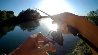 Ловля хищника на реке кубань