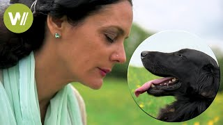 Animal communication - Understanding how animals think and feel