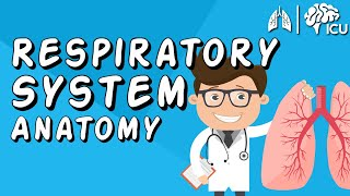 The Respiratory System CRASH COURSE