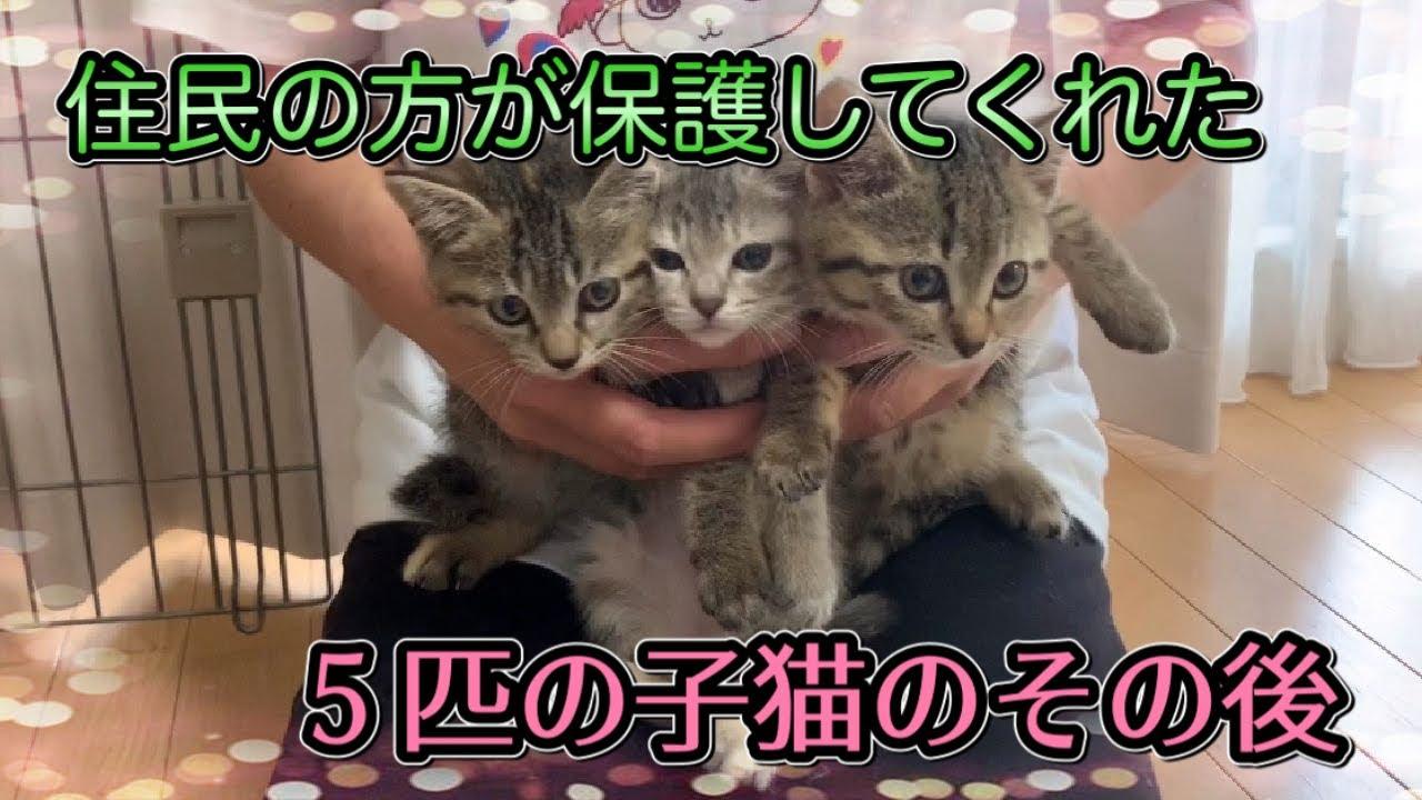 住民の方が保護してくれた子猫5匹キョウダイ達は元気です!【Five kittens】