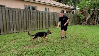How To Train German Shepherd Puppy - 6 months old - Day One Lesson One with Hadley
